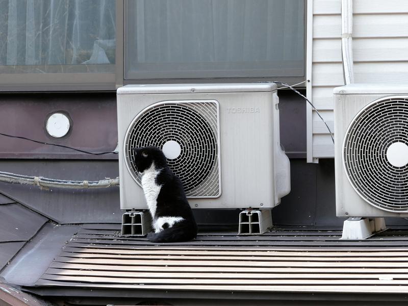 屋根の上で背中を伸ばしてる黒白猫3