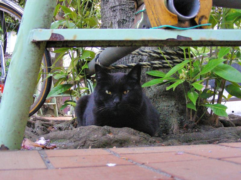公園の黒猫1