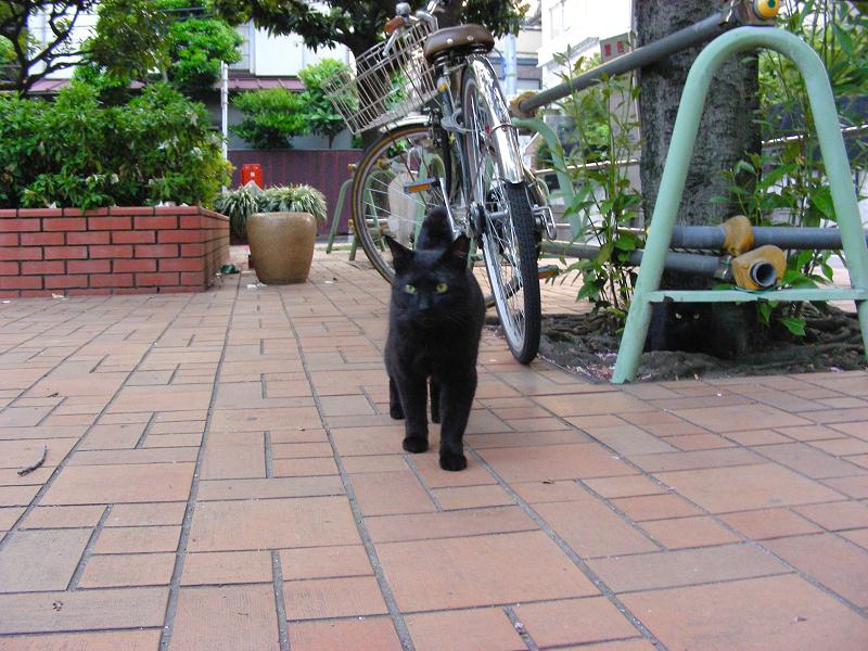 公園の黒猫たち