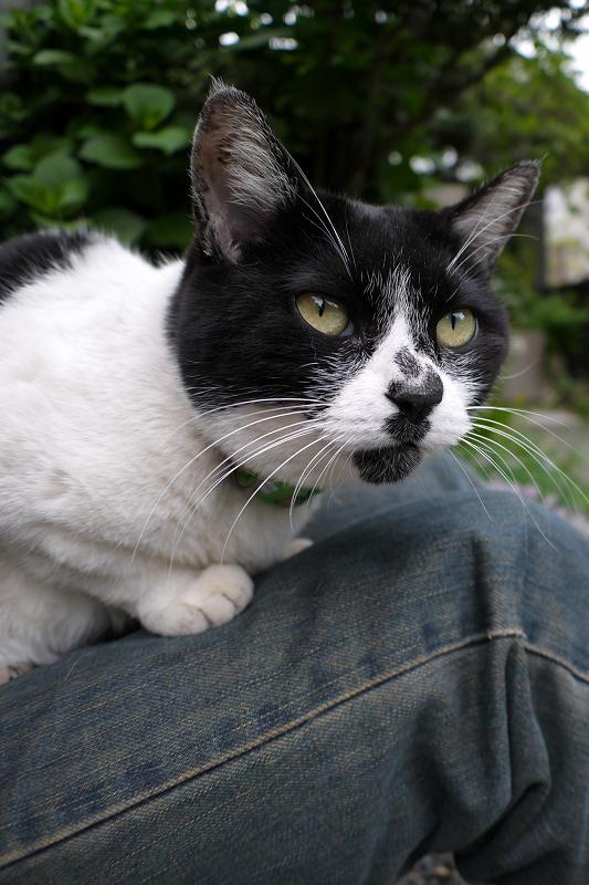 不思議な模様の白黒猫