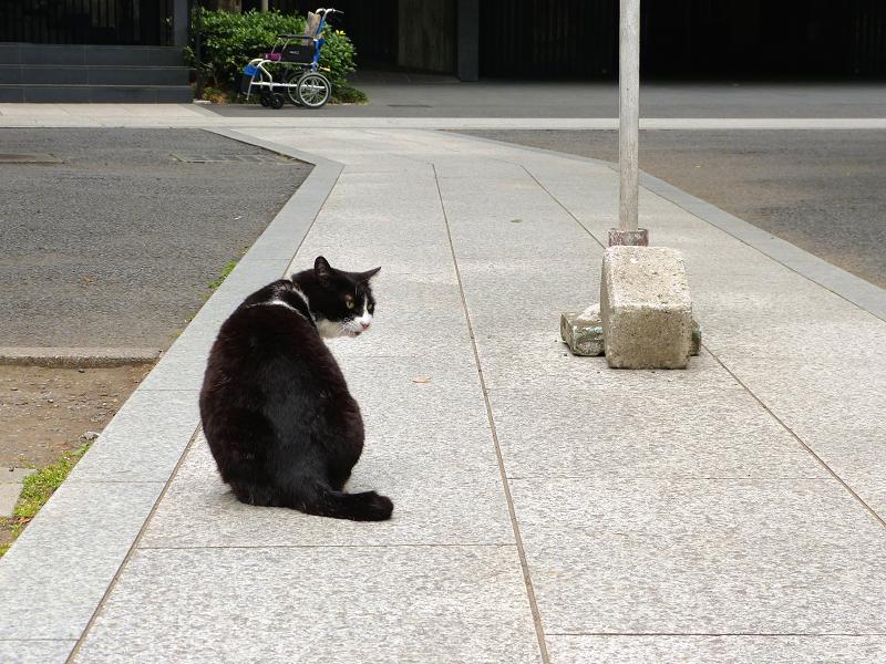 義理姉妹猫4