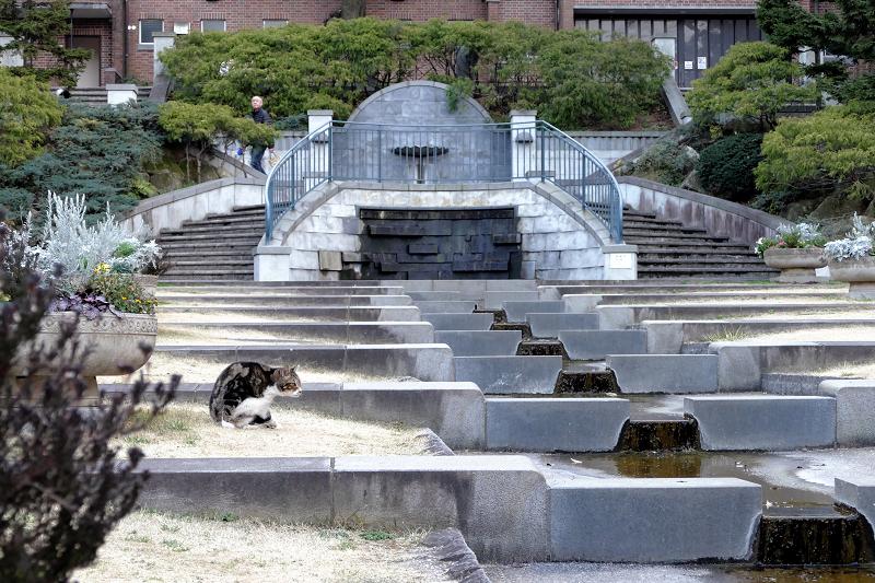 水の施設とアメショー風猫1