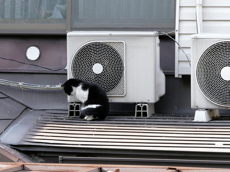 室外機大好き黒白猫1