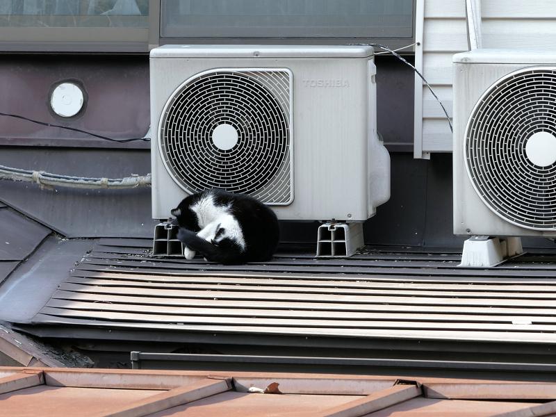 室外機大好き黒白猫2