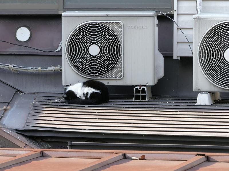 室外機大好き黒白猫3