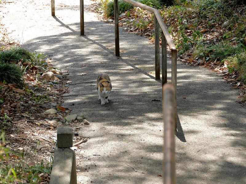 坂道と三毛猫2