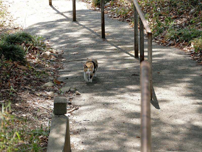 坂道と三毛猫3