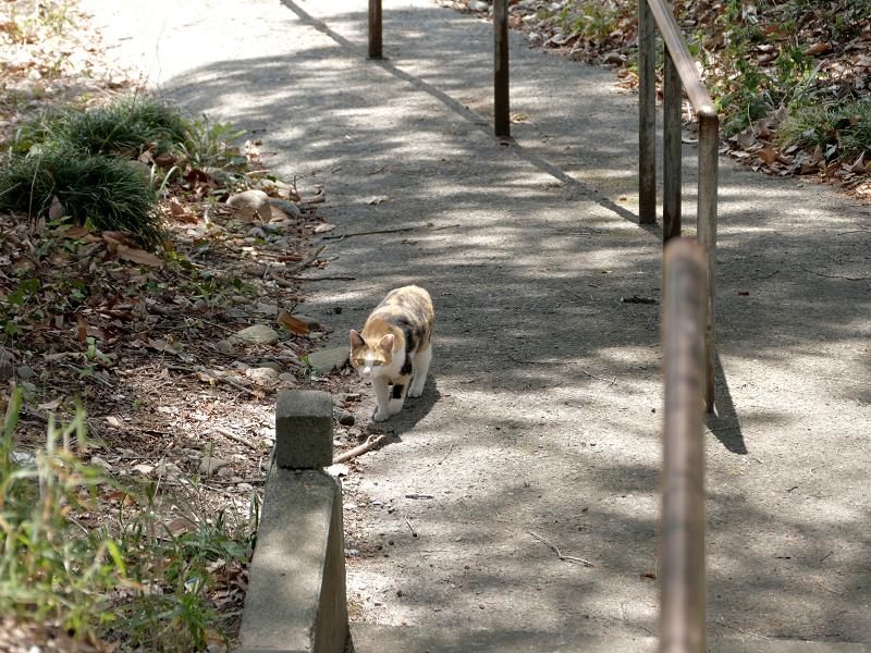 坂道と三毛猫4