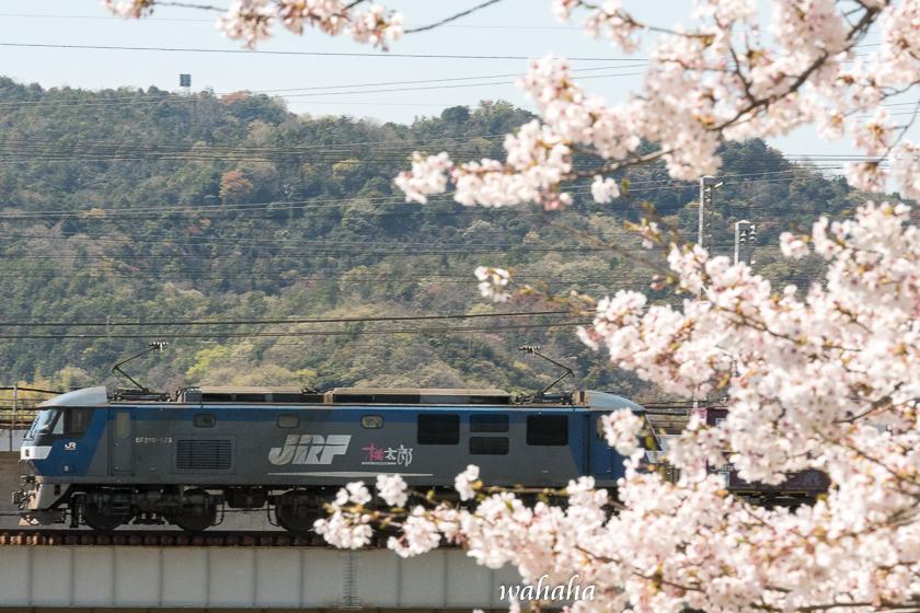 310413ichikawa_zairai-1.jpg