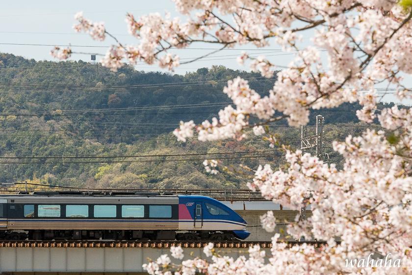 310413ichikawa_zairai-2.jpg