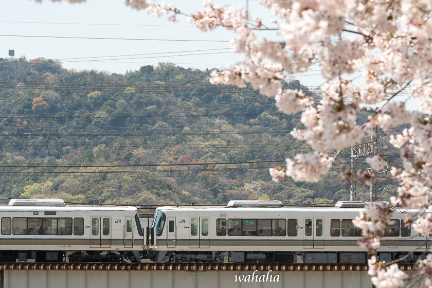310413ichikawa_zairai-3.jpg