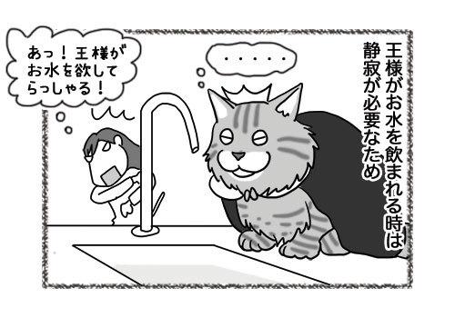 06052019_cat1.jpg
