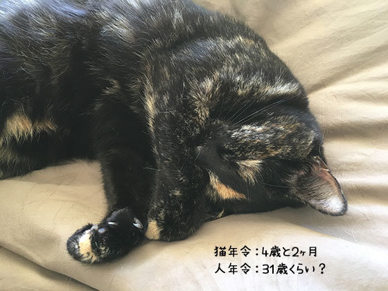 12042019_cat1.jpg