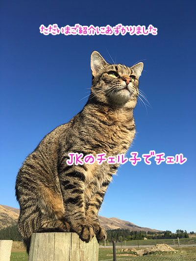 12042019_cat4.jpg