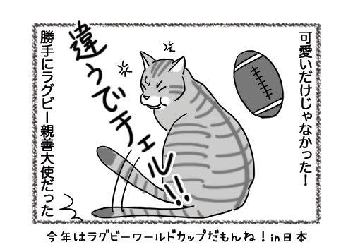 13052019_cat4koma4.jpg