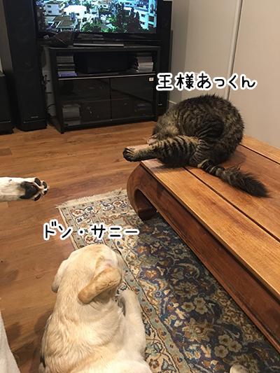 15042019_cat2.jpg