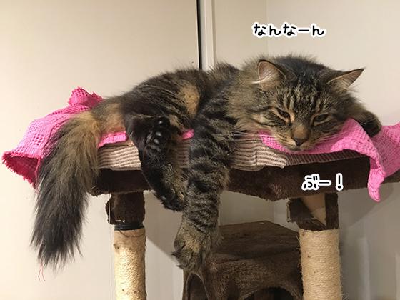 18052019_cat3.jpg