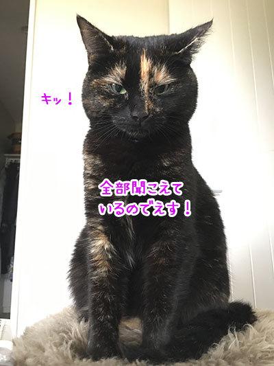 21052019_cat1.jpg
