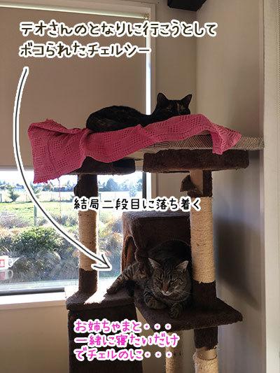 21052019_cat3.jpg