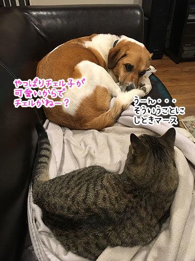 21052019_cat4.jpg