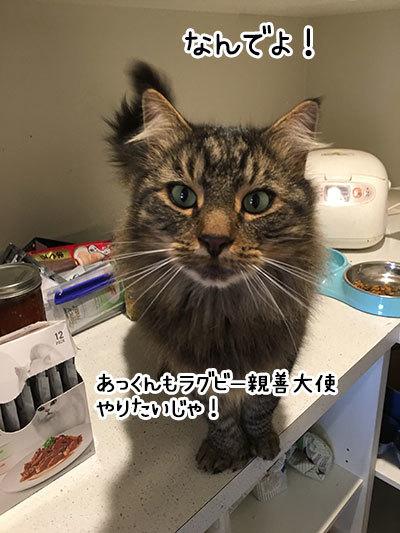 25052019_cat3.jpg
