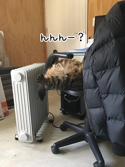 25052019_cat5.jpg