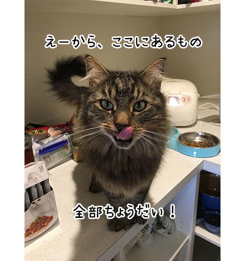 30052019_catpic1.jpg