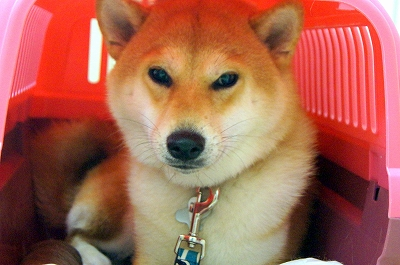 fubuki190617.jpg