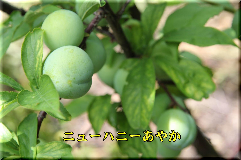 1NHayaka190608_011.jpg