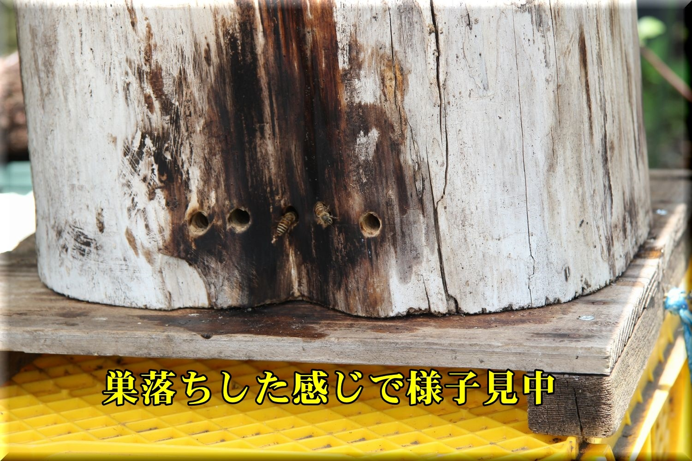 1akiyama190527_002.jpg
