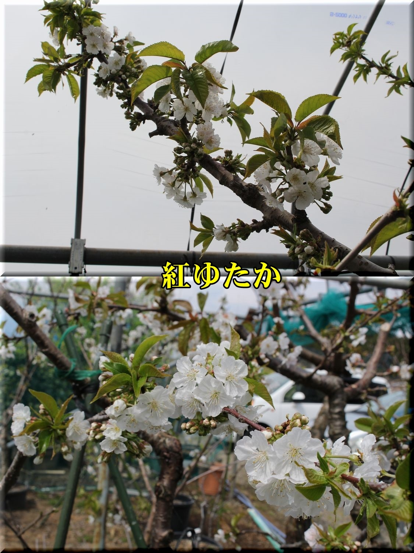 1beniyutaka190414_003.jpg