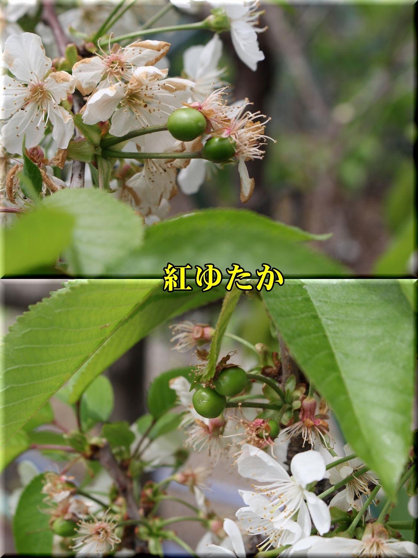 1beniyutaka190423_026.jpg