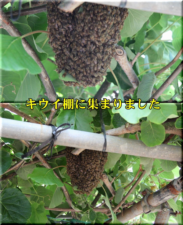 1bunpou190527_018.jpg