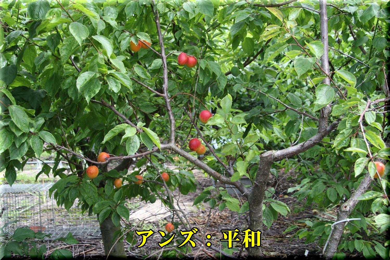 1heiwa190611.jpg