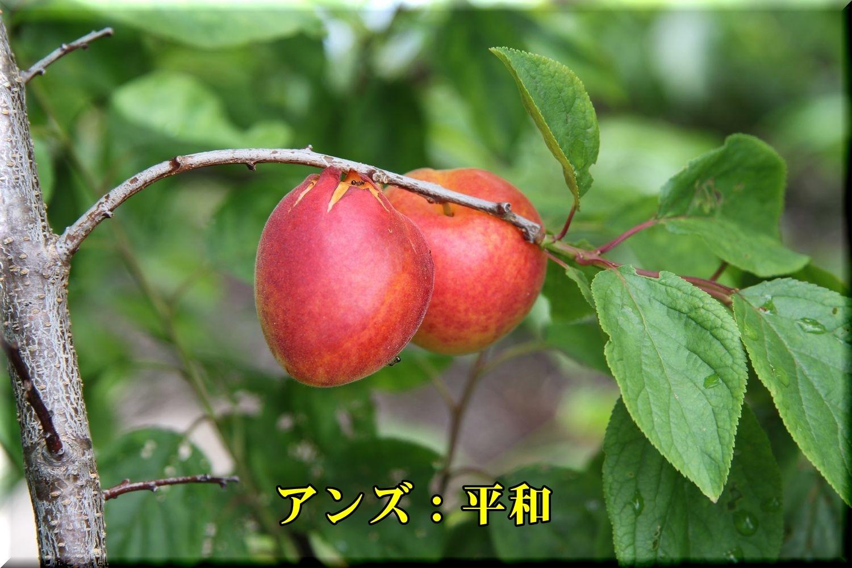 1heiwa190611_001.jpg