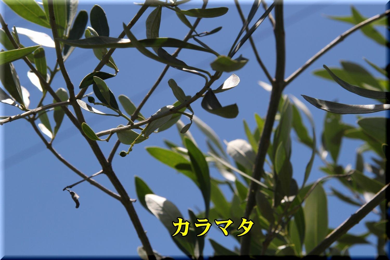 1karamata190616_024.jpg