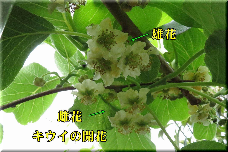 1kou_souyu190501_018.jpg