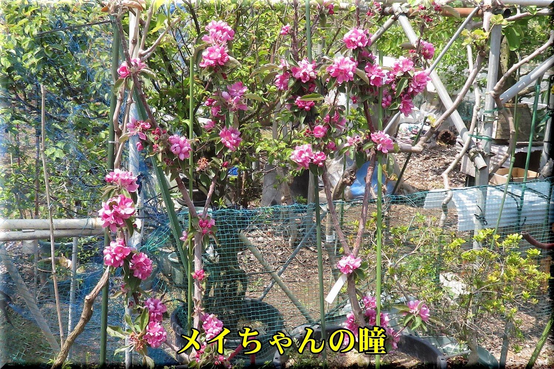 1meichan190420_012.jpg