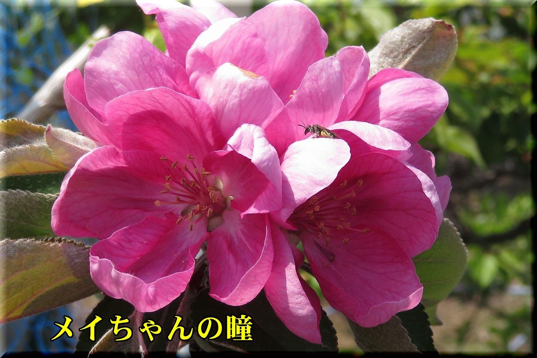 1meichan190420_018.jpg