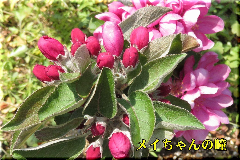 1meichan190420_019.jpg