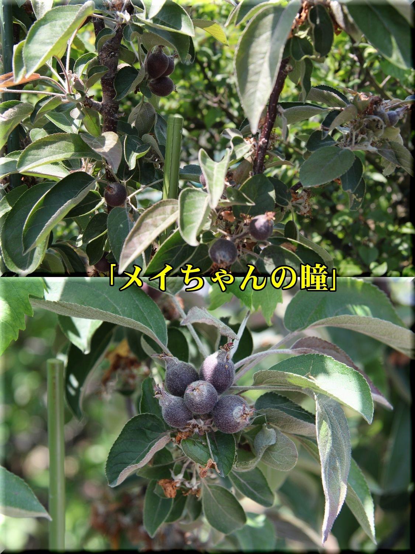 1meichan190511_022.jpg