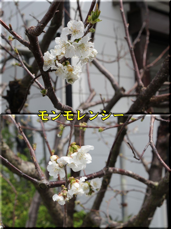 1monmorency190414_029.jpg