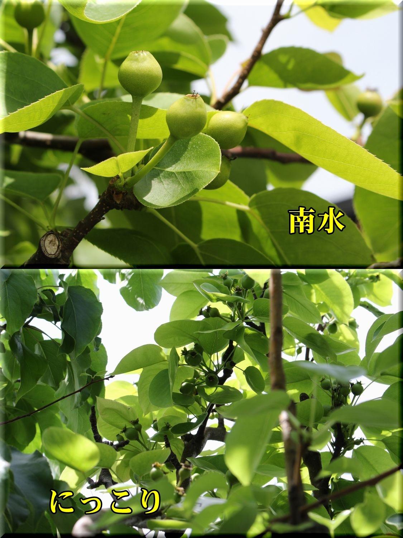 1nansui_nikkor190503_019.jpg