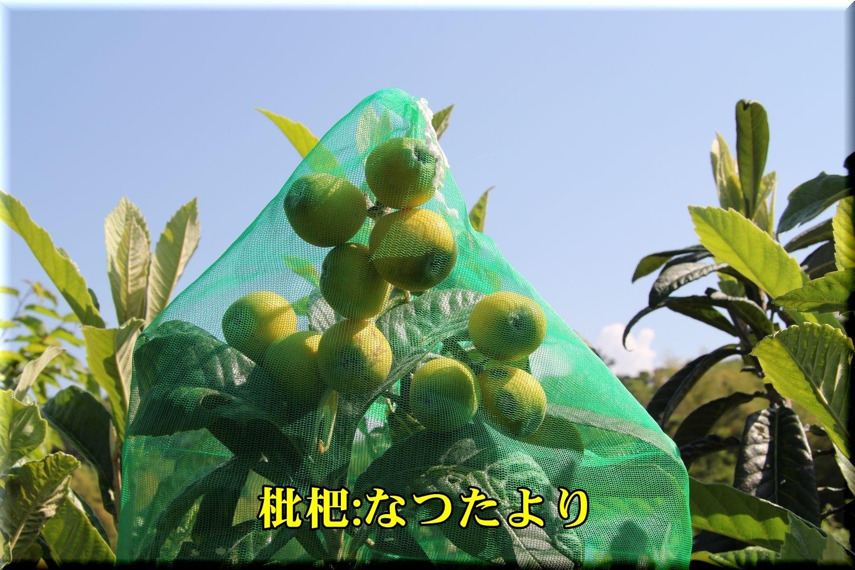 1natutayori190523_001.jpg