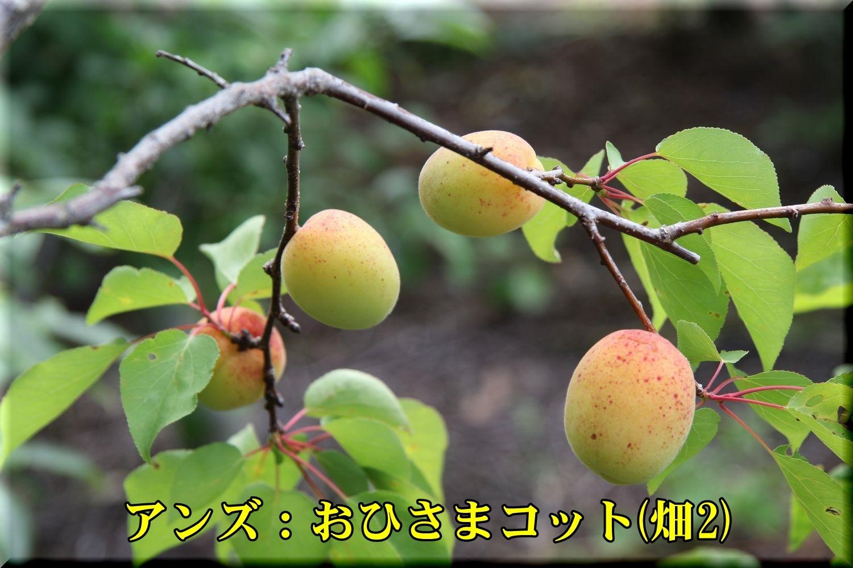 1ohisamaC190611_005.jpg