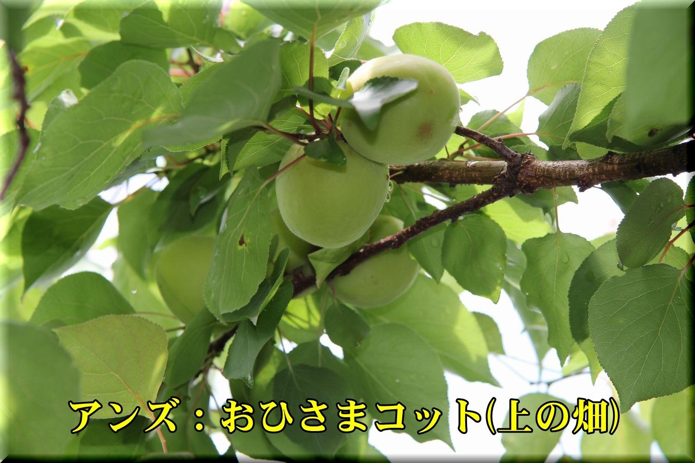 1ohisamaC190611_030.jpg
