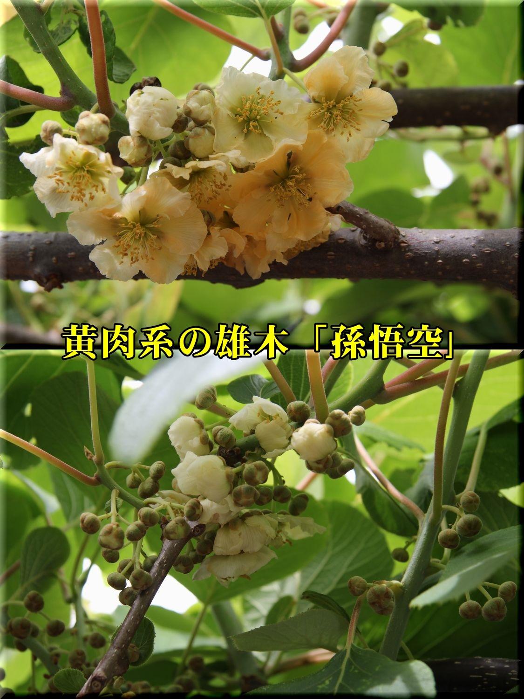 1songoku190509_013.jpg