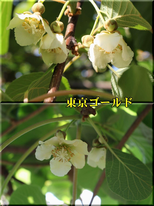 1tokyouG190508_004.jpg