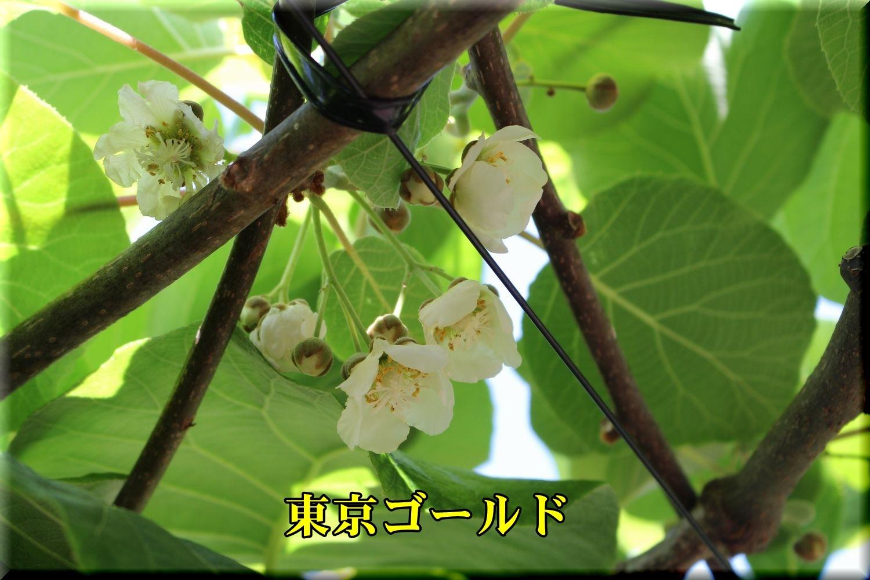 1tokyouG190508_008.jpg
