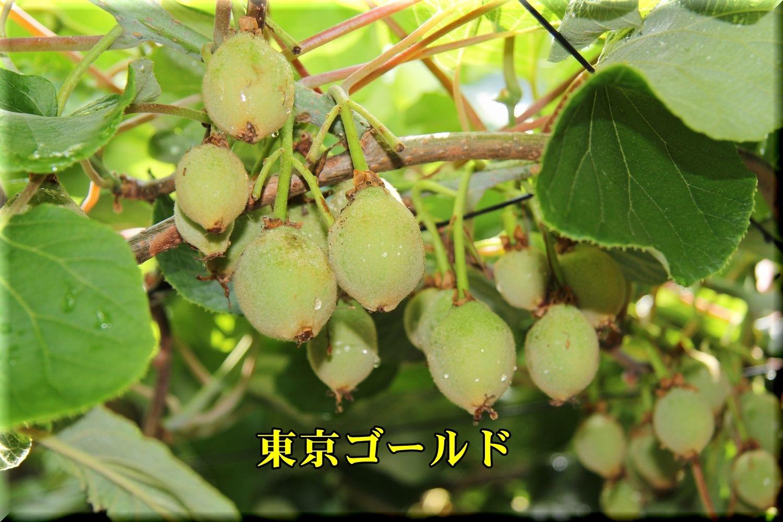1toukyouG190608_030.jpg